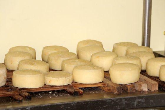 Uitsluiten van allergische reacties door gerijpte kaas naderbij