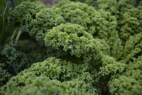 Mogelijk Listeria in verse traiteurmaaltijd andijviestamppot Hoogvliet