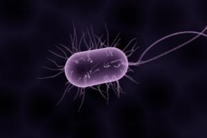NVWA beantwoordt vragen over Listeria (longread)