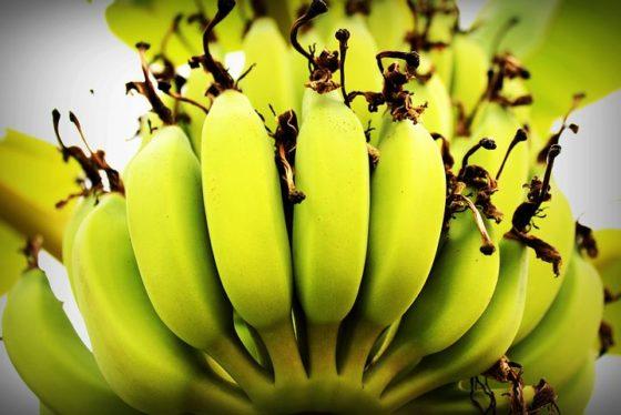 WUR-onderzoek maakt bananenproductie duurzamer en veiliger voor boeren