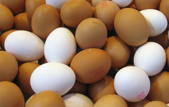 Fipronil bij Twentse boer: duizenden kippen geruimd