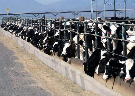 Europese Commissie publiceert richtlijnen voor het verwerken van afgekeurd voedsel tot diervoeder