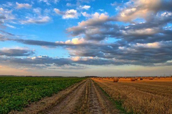Minister Schouten wil naar kringlooplandbouw in 2030