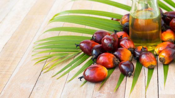 Gebruik duurzame palmolie in diervoederindustrie stijgt gestaag