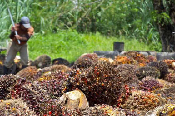 'Keten kan ontbossingsproblemen niet alleen oplossen'