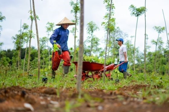 Verstegen verduurzaamt witte peper met regenerative agroforestry