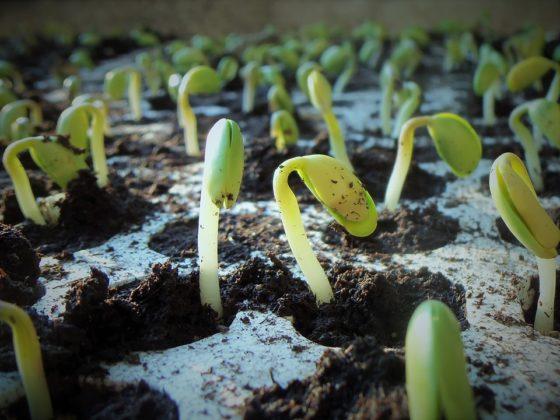'Transitie naar plantaardig eten kost miljarden'