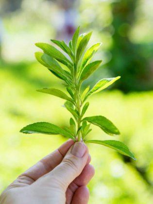 Onderzoekers vinden nieuwe natuurlijke zoetstoffen
