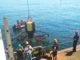 Attachment zeewieroogst noordzeeboerderij juni2015 80x60