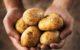 Attachment aardappelen hand 80x50