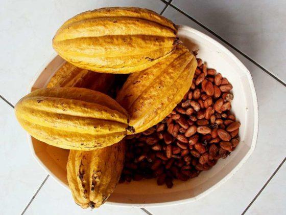 'Ketenpartijen doen te weinig om problemen in de cacaomarkt aan te pakken'