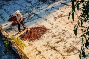 Nieuwe ISO-norm cacao in de maak