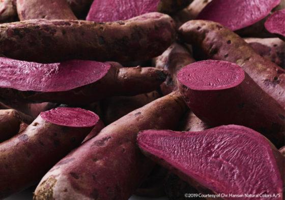 Chr. Hansen teelt zoete aardappel speciaal voor plantaardige rode kleurstof