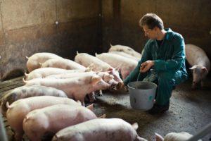Oneerlijke handelspraktijken verhinderen: ACM onderzoekt prijsvorming voedselketen