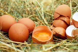 Op eierschalen zit Campylobacter