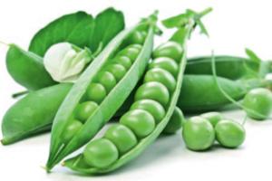 Cosucra investeert in tweede fabriek voor productie erwteneiwit
