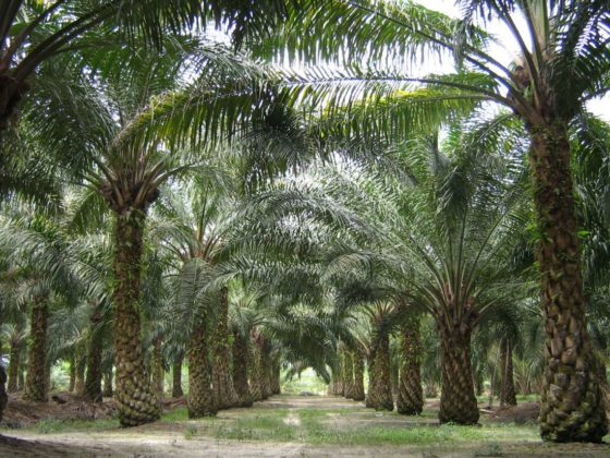'Logo's  duurzame palmolie scoren goed bij Milieu Centraal'