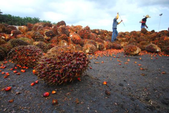 Palmoliebranche over CNV-rapport: 'Alleen samenwerking verbetert arbeidsrechten.'