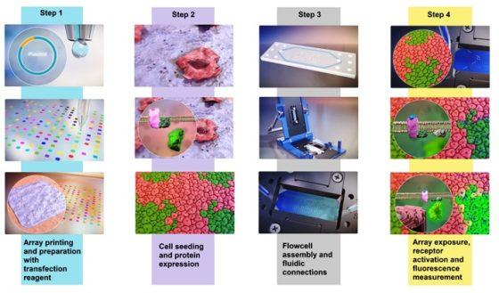 Nieuwe DNA-techniek – receptonomics – helpt de ontwikkeling van gepersonaliseerde voeding