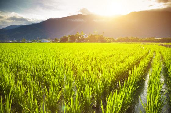 'Nutriënttekorten dreigen door wereldwijde CO2 uitstoot'