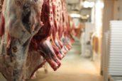 Vion stopt met slachten varkens in Altenburg