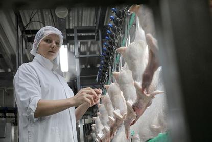 NVWA openbaart namen pluimveeslachthuizen, kritiek Nepluvi