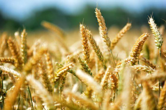 Snackfabrikant Mondelēz krijgt boete voor fraude met graanprijzen