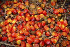 De kleurstof Soedanrood blijft een aandachtspunt