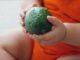 Baby avocado 80x60