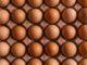 Eieren 80x60