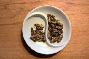 Hoe etiketteer je insectenproducten: de 8 belangrijkste regels