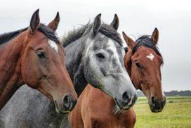 Vleeshandelaar Jan F. opgepakt in Spanje vanwege rol paardenvleesschandaal