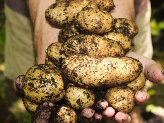 5 foodtrends voor 2020: biodiversiteit & aardappels