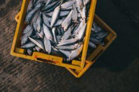 Meer dan 20% van vis in de VS is verkeerd geëtiketteerd