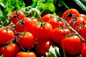 Cherrytomaten zijn mogelijk de oorzaak van zieken