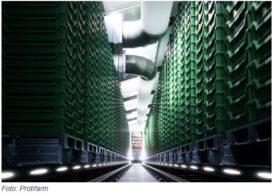 Insectenboerderij Protifarm krijgt miljoenen-injectie